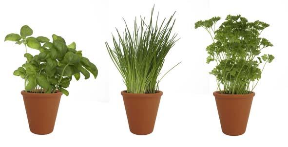 petits pots pour jardiniers d 233 butants decorer sa maison fr
