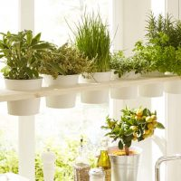 800x445 Bosch HG_Herb Shelf_without Tool potager