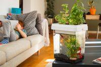 Ozarium, l'aquarium-potager intelligent !