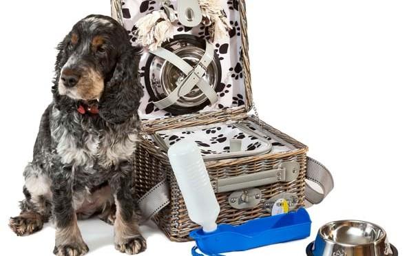 Chic et pratique le panier pique-nique pour chien !