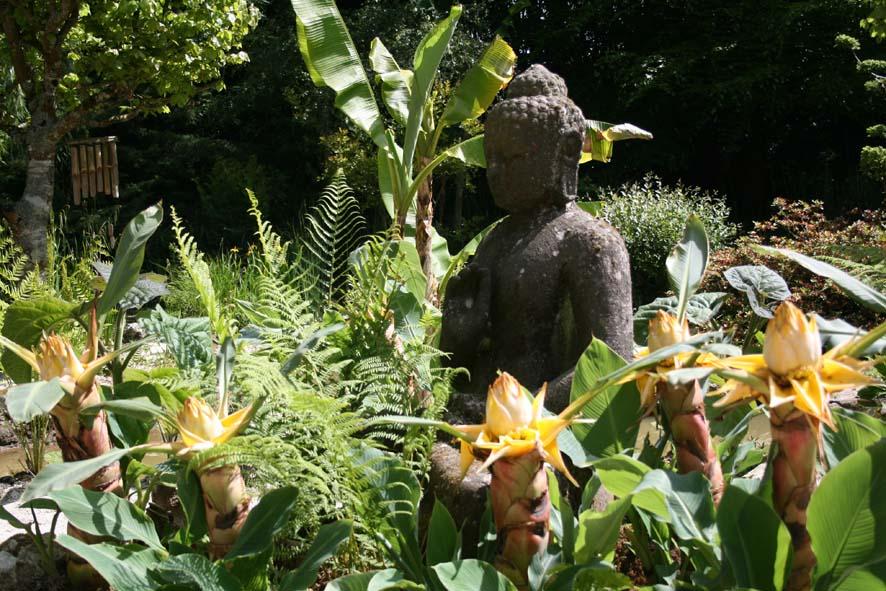 Plantes rarissimes à Tropical Parc
