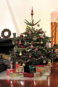 Fixés sur des bûches, rondelles ou des croisillons, les sapins coupés s'installent simplement dans la maison. © AFSNN