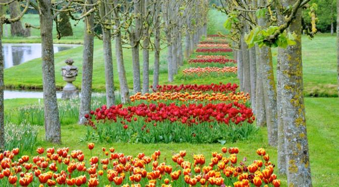 Le Festival de la Tulipe 2015