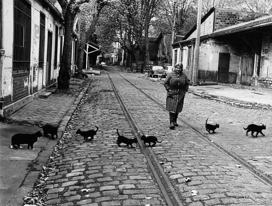 Les chats de Bercy - Paris 1974